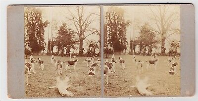 Stereoview-RURAL, Hunters and dogs at start of hunt, ladies sidesaddle on horses