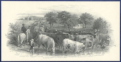 AMERICAN BANK NOTE Co. ENGRAVING: CATTLE PIECE