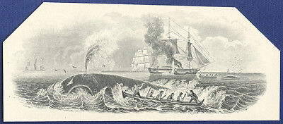 AMERICAN BANK NOTE Co. ENGRAVING: 224b WHALING THERE SHE BLOWS!