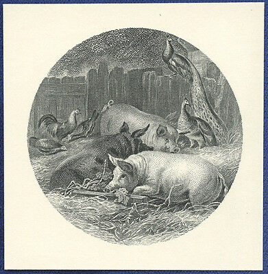 AMERICAN BANK NOTE Co. ENGRAVING: PIGS AND FOWL