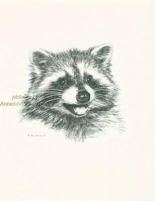 #132 RACCOON portrait wild life art print  * Pen & ink drawing * Jan Jellins