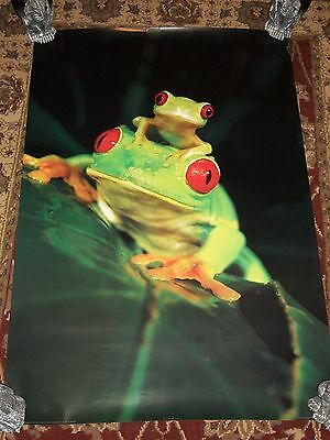 """Red Eyed Tree Frogs 24"""" X 36"""" Poster Free Shipping!!!"""