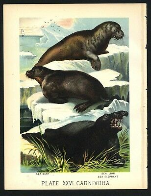 SEA LION, BEAR, ELEPHANT, Vintage 1897 Chromolithograph Print, Antique, 026