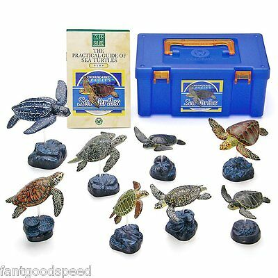 Colorata Sea Turtles Solid  Illustrated book Real figure box Best Buy Gift New