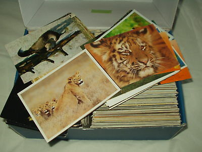 LARGE COLLECTION (900) of POSTCARDS OF ANIMALS & BIRDS over 4kg