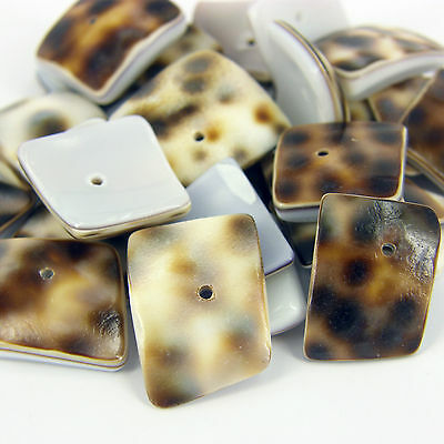 25 x Drilled leopard Craft Shells SQ Seashells for craft & Beads Jewellery SH3