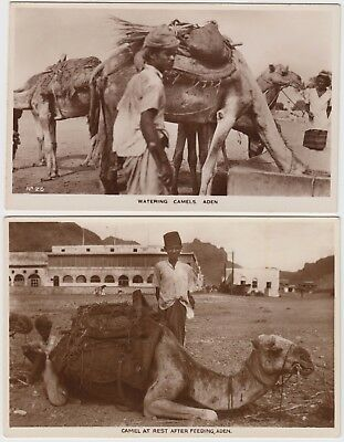 MIDDLE EAST 2x ADEN postcards of *WATER CAMELS* & *CAMEL at REST AFTER FEEDING*