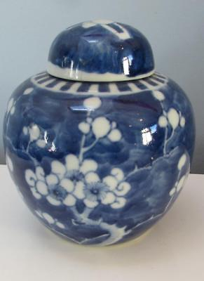 Chinese 19thC Blue and White Ginger jar - Kangxi Mark