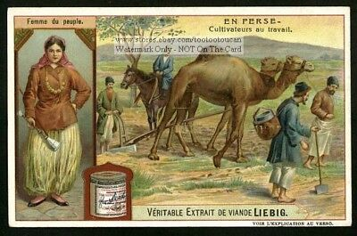 Persia Iran Farmiing Plowing With A Camel c1907 Trade Ad  Card