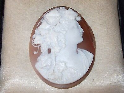 Fabulous Antique Finely Detailed Carved Shell Unmounted Cameo - Bacchus?