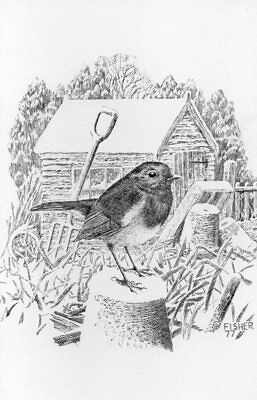PLAIN BACK CHRISTMAS GREETING CARD of ROBIN BIRD IN A GARDEN Fisher