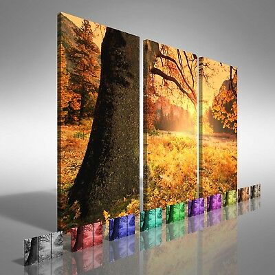 Fields of Tree Leaves Treble Canvas Print Large Picture Wall Print