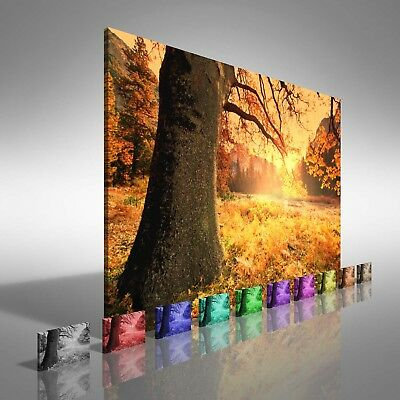 Fields of Tree Leaves Canvas Print Large Picture Wall Print