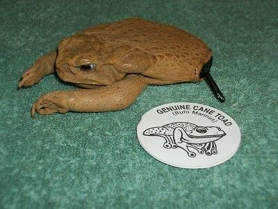 New Genuine Cane Toad Bufo Marinus Coin Change Purse Frog Money Wallet Holder