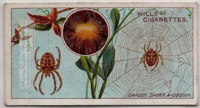 European Garden Spider Insect Plant Pest 100+ Y/O Trade Ad Card