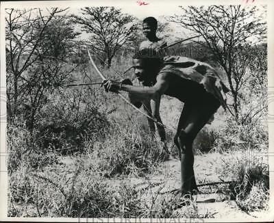 1973 Press Photo African Bushmen; Bow and arrow hunters search for game