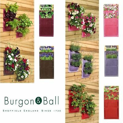 Burgon and Ball Verti plant Hanging Planting System Holder 2 Pack Various Colour