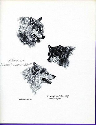 #323 IN PRAISE OF THE WOLF art print 3 Wolves *  pen & ink drawing  Jan Jellins