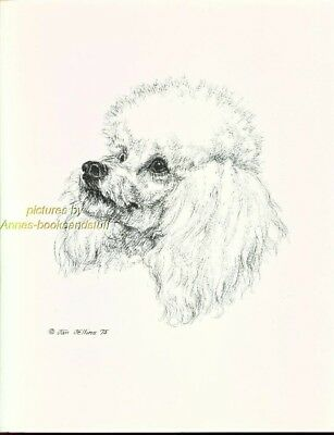#40 WHITE POODLE  portrait *  dog art print * Pen and ink drawing * Jan Jellins