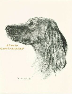 #29 IRISH SETTER  portrait *  dog art print * Pen and ink drawing * Jan Jellins