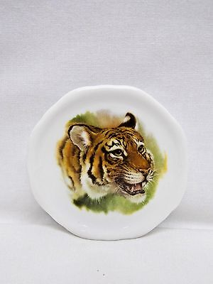 Tiger Wild Cat Animal Porcelain Plate Magnet Fired Head Decal 2 1/2 In Wide
