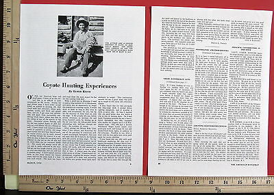 1934 COYOTE HUNTING EXPERIENCES guns 3-Page MAGAZINE ARTICLE by Elmer Keith 8460