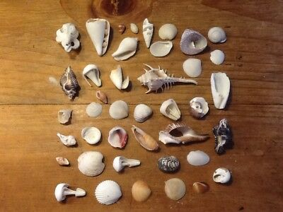 Natural Hermit  Sea Shells From Around The World Fish Tank Art Work Decorations