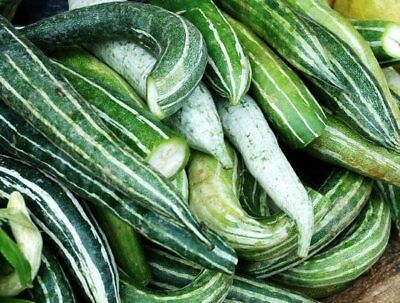 CUCUMBER Armenian Striped 15 seeds vegetable garden snake painted serpent melon