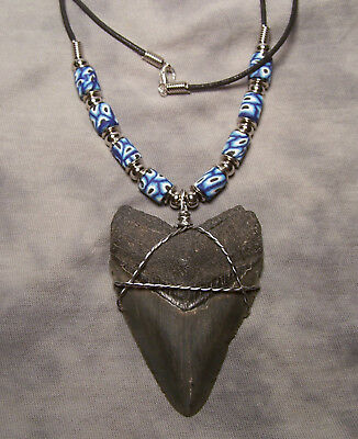 """Megalodon   Shark Tooth Teeth Necklace  2 3/4""""  Fossil Jaw Megladon Scuba Diver"""