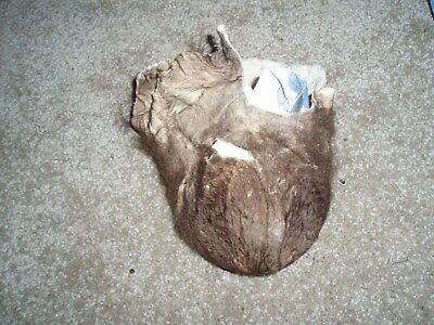 SOFT TANNED bison scrotum buffalo Ball bag oddity nutsac gag gift mountain man 8