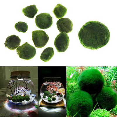 3-4CM Marimo Moss Ball Algae Live Plant Aquarium Fish Tank Ornament Decoration