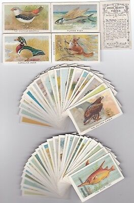 Cigarette Cards Wills Birds, Beasts & Fishes Full Set Of 50 Nz
