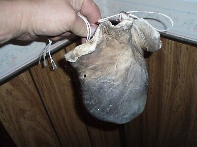 bison scrotum real buffalo Ball bag oddity nutsack gag gift mountain man bag 3