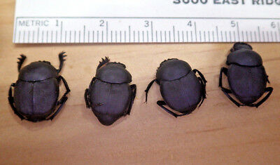 4X Small Black Dung Beetles Canthon imitator ? Scarabaeidae South Texas L216