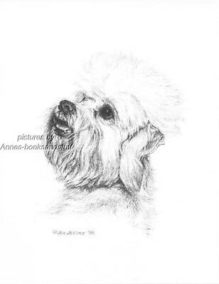 #390 DANDIE DINMONT TERRIER * dog art print * Pen and ink drawing * Jan Jellins
