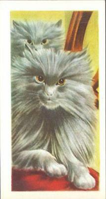 CAT Persian Gray, Lovely Trading Card, 1950s