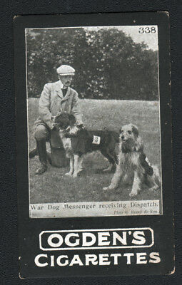 DOG Border Collie War Dog 2, Photo Trading Card, 1901