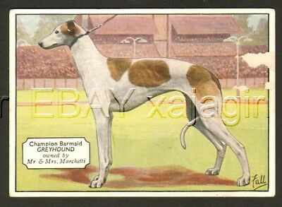 DOG Greyhound (Named), Antique 1930s Trading Card