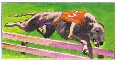 DOG Greyhound, Steeplechase Jump Race 1970 Trading Card 40+ Years Old
