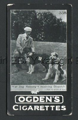 DOG Messenger Dog Border Collie Photo Trading Card 1902