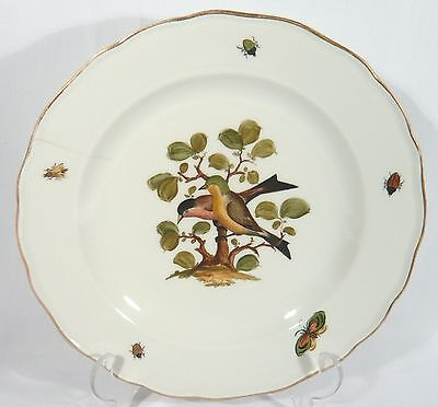 "Antique Meissen Rothschild Bird Insect 9 1/2"" DINNER PLATE Ornithological #2"
