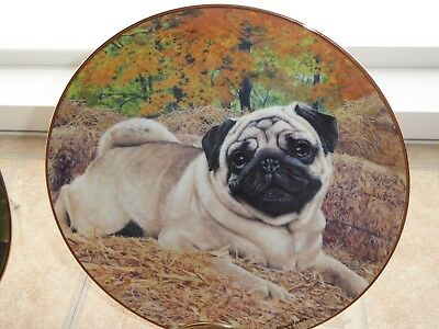 Danbury Mint  Pugs Plate Simon Mendez  Country Pug  New 1 Of Many Listed