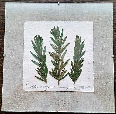 Thomas Siciliano Original Signed Handmade Rosemary Herb Paper