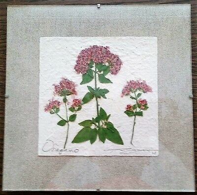 Thomas Siciliano Original Signed Handmade Oregano Herb Paper