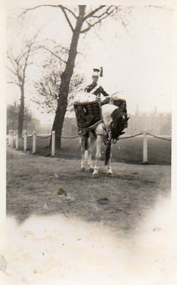 VINTAGE PHOTOGRAPH postcard CEREMONIAL MILITARY DRUM HORSE no date or location