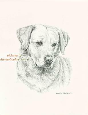 169 YELLOW LABRADOR lab RETRIEVER dog art print Pen & ink drawing by Jan Jellins