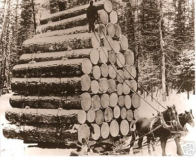 Michigan Logging Classic Photo Worlds Fair Load Of Logs Pulled by Two Horses WOW