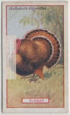 Commercial Value Of The Turkey Bird 90+ Y/O Trade Ad Card