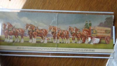 Panoramic Budweiser Beer Clydesdale 8 Horse Hitch Postcard 11 Inches Long Vintag