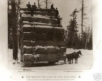 Worlds Fair Load of Logs Two Horses Pulling The Largest Logging Sleigh 1893